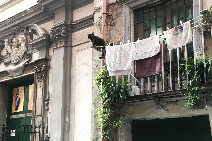 Napoli street cat