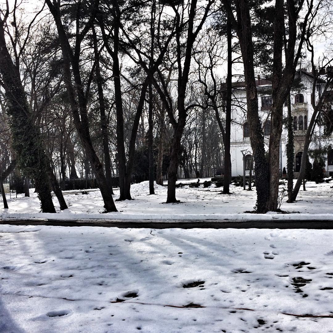 Still winter snow winterfun whitemood instadaily white park