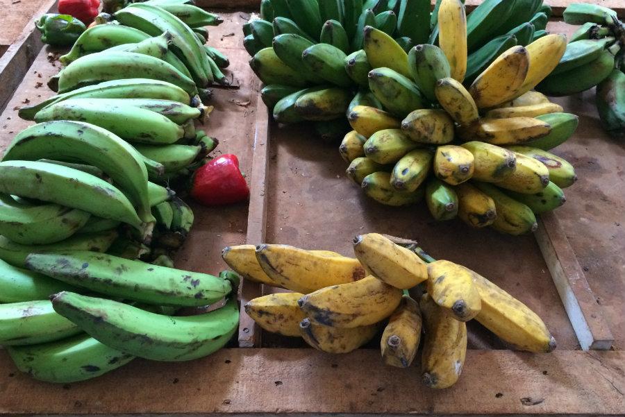 fruits Havana Cuba market